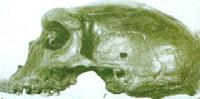 cranio_neanderthal_zambia_con_foro_proiettile_38mila_anni