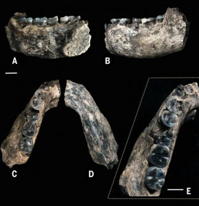 Il fossile di Ledi–Geraru (REUTERS/Arizona State University/William Kimbel/Handout via Reuters)