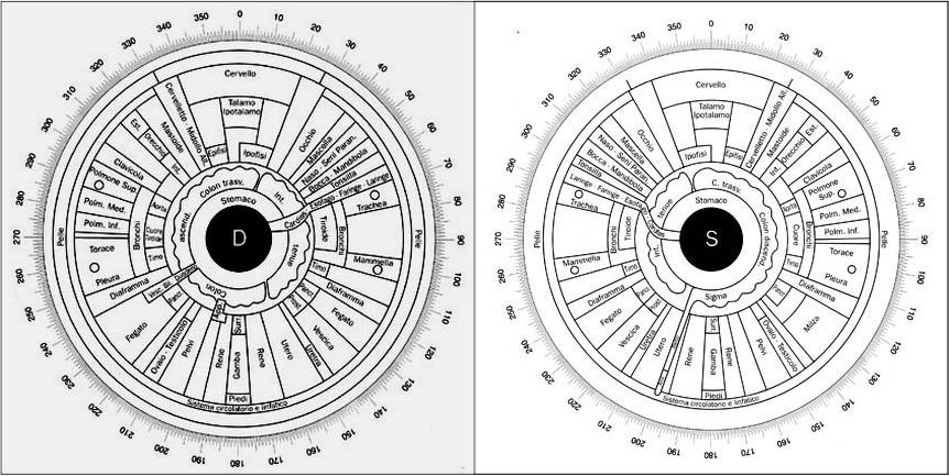 Siegfried Rizzi Mappa Iridologica iride occhio destro e sinistro