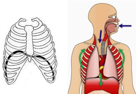 fisiologia del respiro