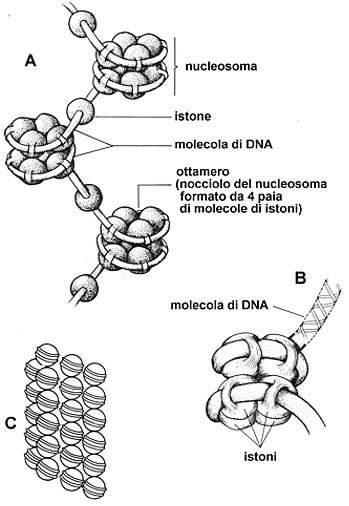nucleosoma