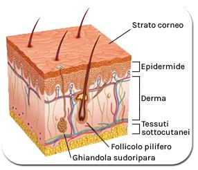 struttura pelle