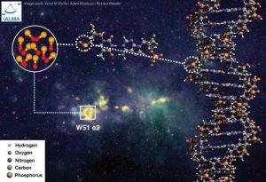 molecola P-O