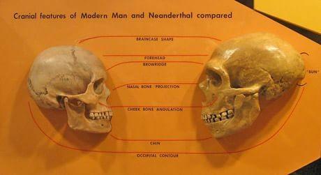 Origini 4 Homo sapiens