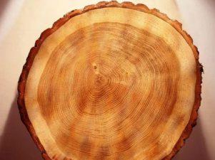 anelli alberi - tempeste solari 2