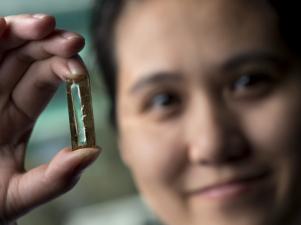Immagine - il dott. Reginald Penner chimico presso la University of California Irvine e la dott.ssa Mya Le Thai (nella foto sullo sfondo) hanno sviluppato una tecnologia basata su nanofili che potenzialmente permette di ricaricare le batterie agli ioni di litio centinaia di migliaia di volte. Credits: Steve Zylius / UCI