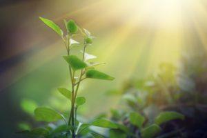 fotosintesi inversa