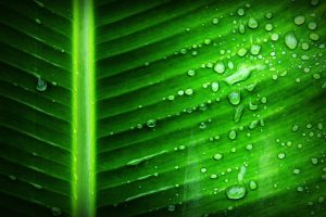 fotosintesi