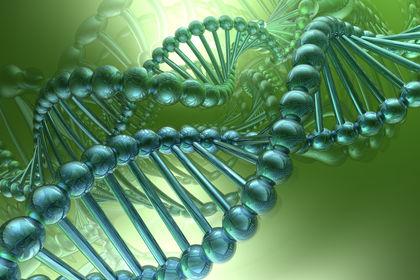 L'ARMONIA DEL DNA