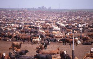 Consumo della carne e possibili conseguenze 1