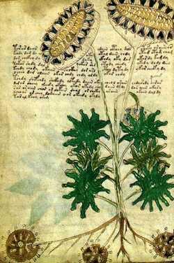 Manoscritto di Voynich, le nuove indagini sul volume indecifrabile