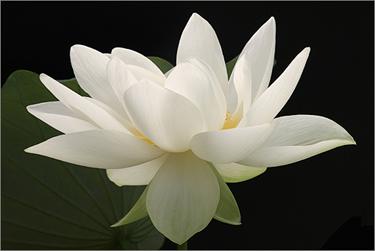 Edgar Cayce: La Meditazione