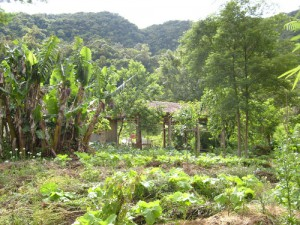 Agricoltura Naturale