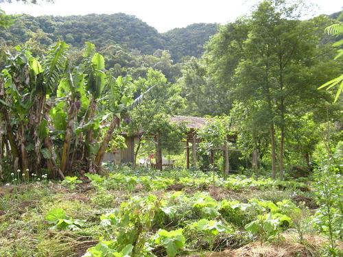 Permacultura e Agricoltura Naturale, per ricreare il nostro mondo