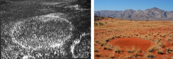 Forest Rings in Canada e Cerchi delle Fate in Namibia
