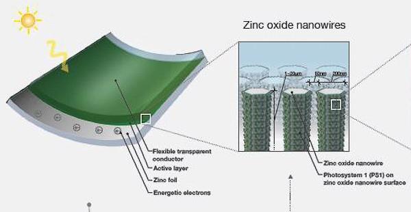 Piante trasformate in pannelli solari
