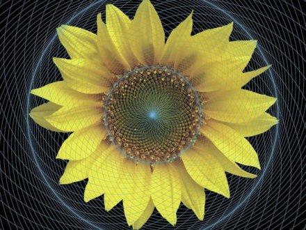 Cosmometria: Spirale e Nodi Phi