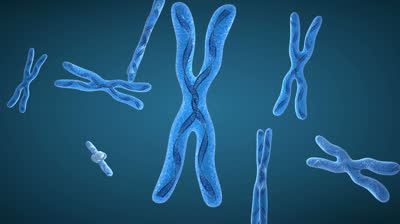 Breve introduzione alla genetica ondulatoria