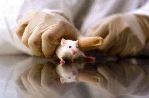 Uomini e bestie: sperimentazione animale