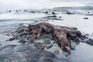Tempesta porta alla luce antica foresta sommersa