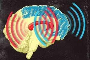 Onde cerebrali sincronizzate nell'apprendimento rapido