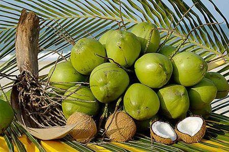 Acqua di cocco: un alimento disintossicante ed energetico