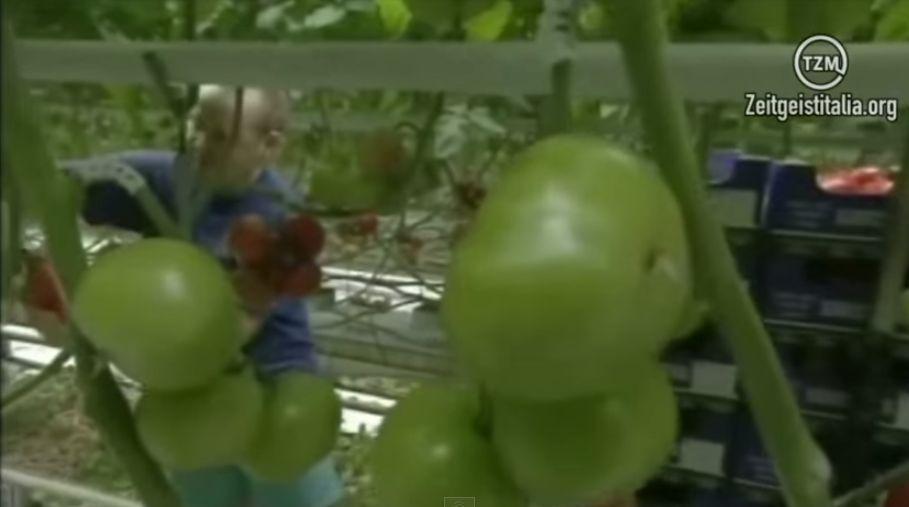 La coltivazione idroponica