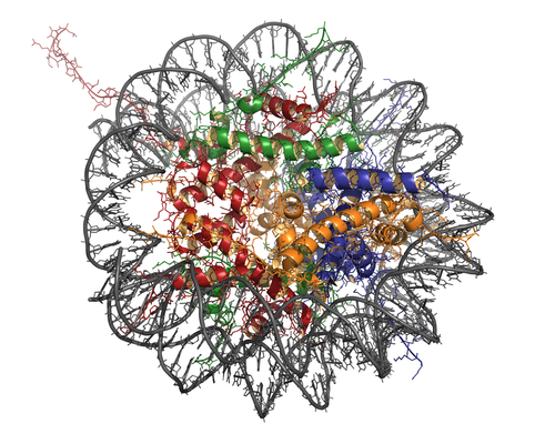 In che modo l'epigenetica conferisce forma alla vita?