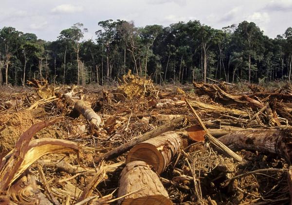 Olio di palma, possiamo fermare la deforestazione?