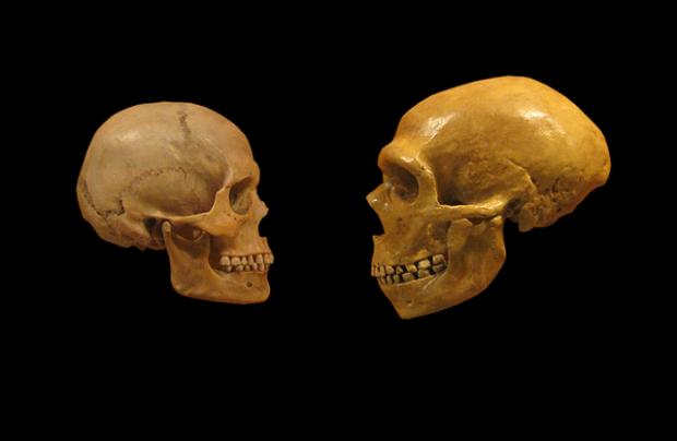 Le quattro fasi evolutive del corpo umano