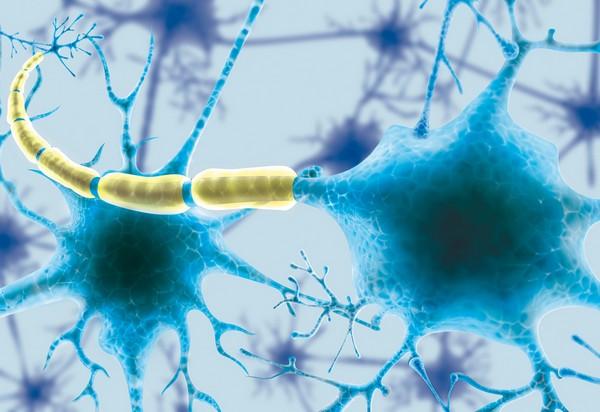 Vasi linfatici – Scoperto collegamento fondamentale tra cervello e sistema immunitario
