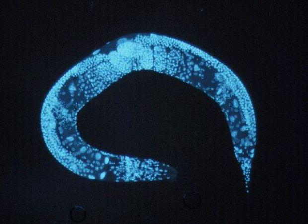 Attivare neuroni in modo specifico con gli ultrasuoni