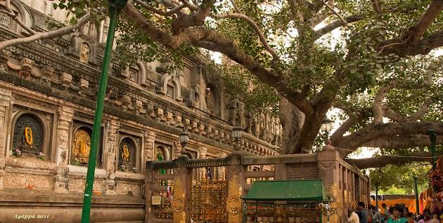 Albero e Tempio della Mahabodhi visti da nord. Bodhgaya India