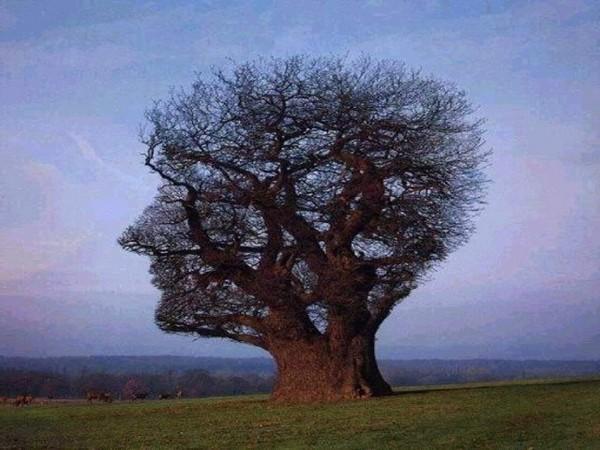 La respirazione – Dalla fisiologia al pranayama