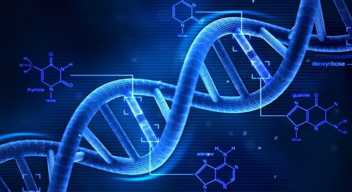 DNA cromosomi