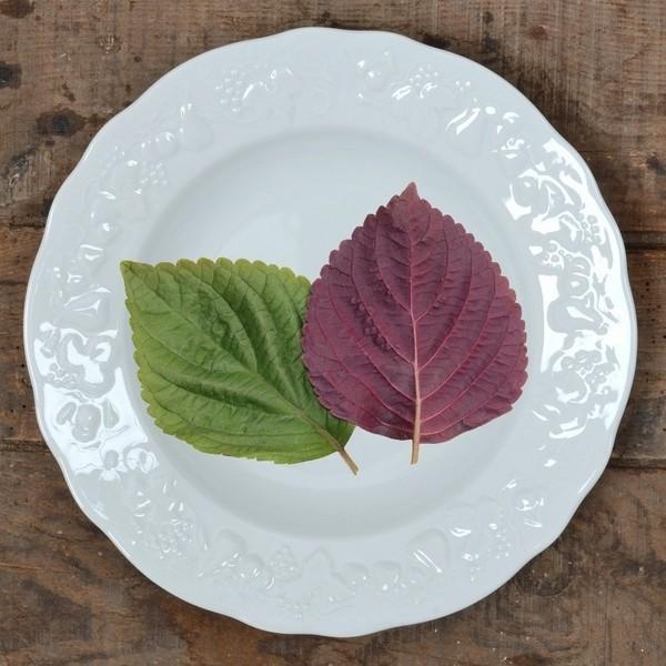 "Shiso – Un ""glocal-superfood"" dall'antica tradizione giapponese"