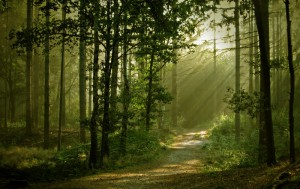 FSC anteprima articolo - foreste