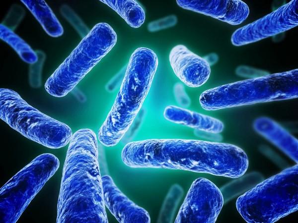 I probiotici distruggono le sostanze chimiche tossiche nel nostro intestino
