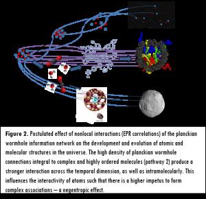 Figura 2. Effetti postulati di interazioni nonlocali (correlazioni EPR) della rete di informazione (wormholes alla scala di Planck) sullo sviluppo e l'evoluzione di strutture atomiche e molecolari nell'universo. L'alta densità di wormholes integrata alle molecole complesse e ordinate (percorso 2), producono una forte interazione lungo la dimensione temporale e anche intramolecolare. Questo influenza l'interattività degli atomi verso un forte impeto a formare associazioni complesse, un effetto negentropico.