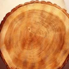 anelli alberi - tempeste solari