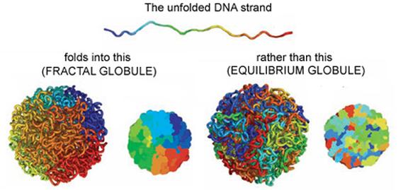 La medicina scandaglia il genoma per diventare più precisa