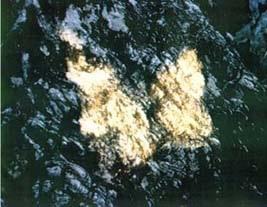 La farfalla dorata nel promontorio del Caprione 1