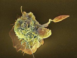 Una scossa per riordinare il sistema immunitario 2