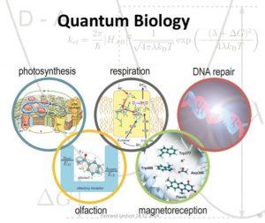 Effetto Zenone Quantistico in un qubit superconduttore 2