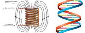 La economia circolare: il ruolo dei biofotoni nel modello evolutivo del ciclo di rigenerazione della vita 1