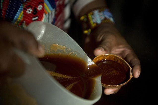 Ayahuasca, la droga del 'benessere' contro l'alcolismo e la depressione