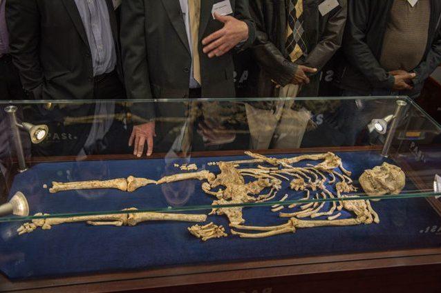 Little Foot riscrive la storia dell'uomo: è il più antico fossile completo di ominide