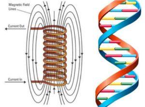 Biologia quantica e biofononi 2