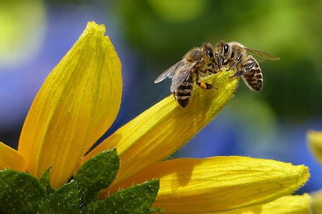 L'Unione Europea vieterà i pesticidi che danneggiano le api?