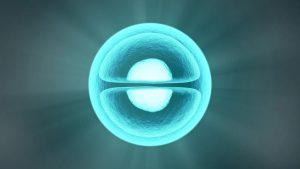 Ecco come da una cellula si forma un intero organismo 1